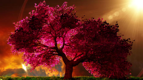 Cherry Blossoms Tree v1 04 Animation
