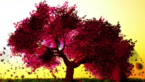 Cherry Blossoms Tree v1 06 falling petals Animation