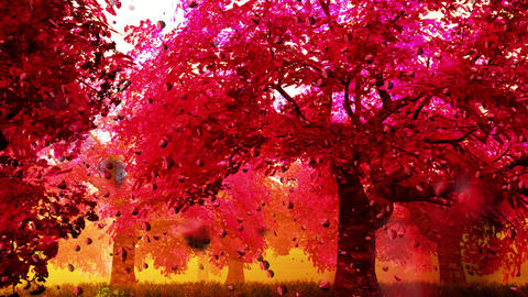 Cherry Blossoms Trees v2 04 falling petals Stock Video Footage