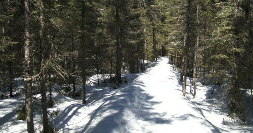Snowy trail in Algonquin Provincial Park, Canada Footage