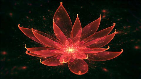 Lotus Water Lily, Enlightenment or Meditation and Universe, Magic scene Animation