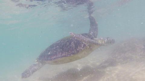 large sea turtle underwater close-up Footage