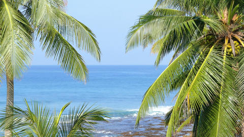 beautiful blue sea landscape with palm leaves Footage