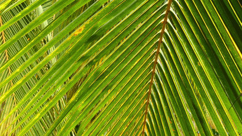 Palm leaves closeup background Footage