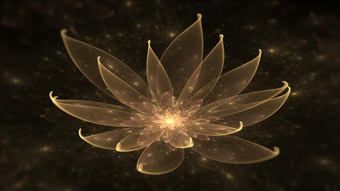 Golden Lotus Water Lily, Enlightenment or Meditation and Universe, Magic scene Animation