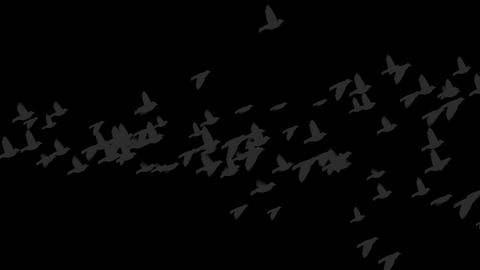 4k Flying Birds Silhouette stock footage
