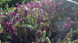 rockery plant in wind Footage