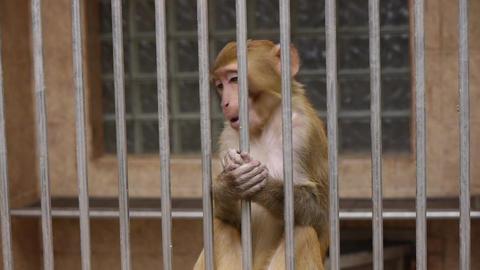Monkeys in Scientific Apery 6 Live Action
