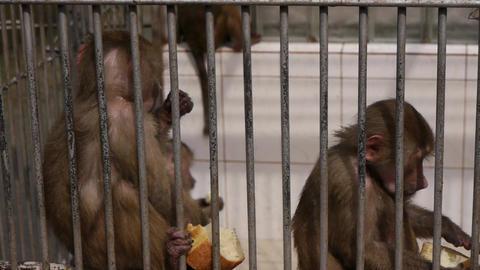 Monkeys in Scientific Apery 7 Live Action