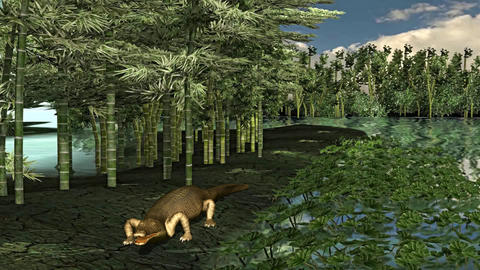 Crocodile Walk on Tropical Bambo Forest Environment Footage