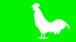 White Shaped Animated Rooster Singing stock footage