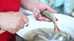 Manual Cleaning The Fish stock footage