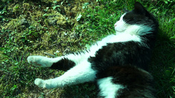 Cat Sleep in the Sun in a Funny Position Footage