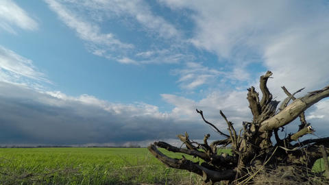 Root of a Tree and Clouds Sweep Over the Green Field Footage