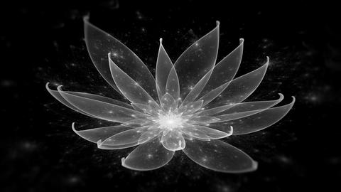 White Lotus Water Lily, Enlightenment or Meditation and Universe, Magic scene Animation
