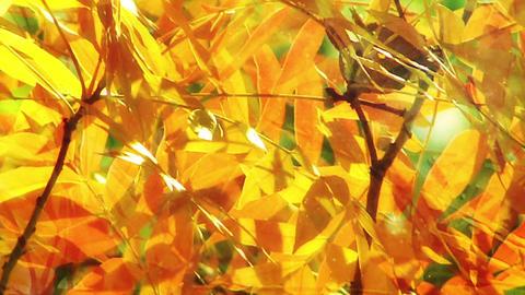 Autumn 24 Footage