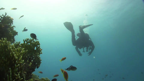 Diver Swims Over Coral Reefs stock footage
