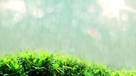 Loop able raining drops in lights on green leaf Footage