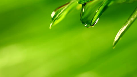 Waterdrop falling from grass Footage