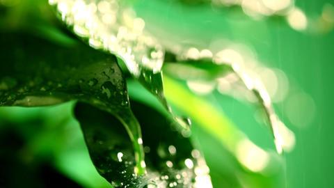 Water falling on leaves Footage