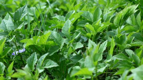 Green summer grass Footage