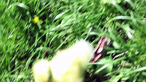 Baby Duck In Nature 01 stock footage
