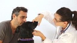 Female veterinarian examine a dog Footage