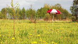 umbrella on meadow Footage
