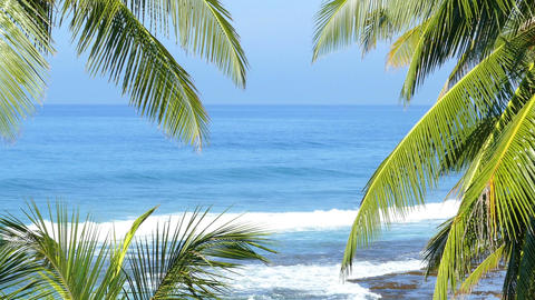 blue sea landscape with palm leaves Footage