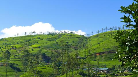 Mountain Tea Plantation In Sri Lanka stock footage
