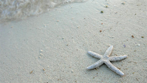 Starfish on the beach. 4K resolution Footage