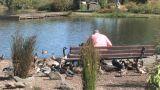 Senior Feeding Ducks Footage