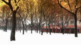Snowy Suburb 14 stylized Footage