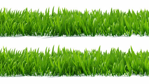 Growing grass with alpha channel Stock Video Footage