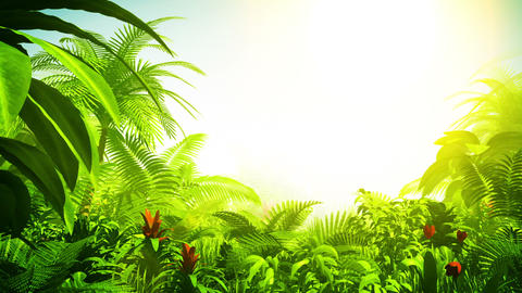 Growing tropical forest Stock Video Footage