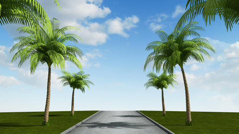Road with palm trees, loop Stock Video Footage