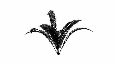 Growing fern with alpha channel Stock Video Footage