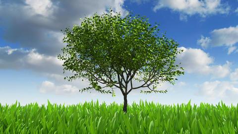 Growing tree Stock Video Footage