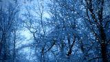 Snowfall Footage