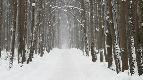 road in winter wood Stock Video Footage