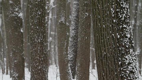 tree trunks Stock Video Footage
