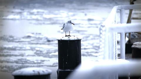 Seagull on Dock Winter 02 Stock Video Footage
