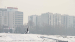 Seagulls over Icy River 02 city with sound Stock Video Footage