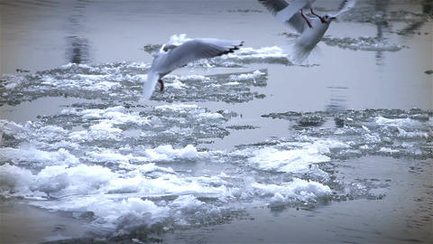 Seagulls over Icy River 10 with sound Stock Video Footage