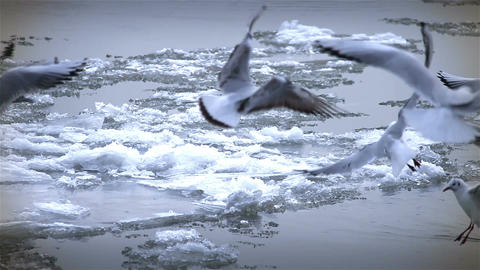 Seagulls over Icy River 10 with sound Footage