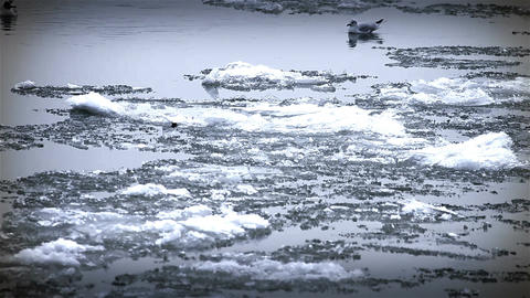 Seagulls over Icy River 12 Stock Video Footage
