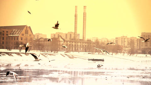 Seagulls over Icy River 13 city with sound Stock Video Footage