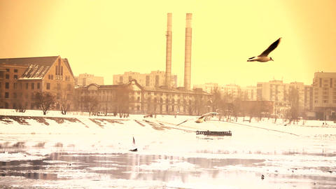 Seagulls over Icy River 13 city with sound Footage