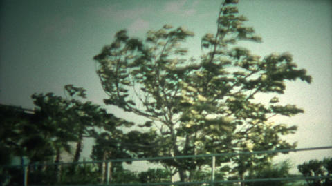 (8mm Vintage) Hurricane Blowing Big Trees Footage