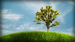 New life. Small tree growing, closeup video Animation